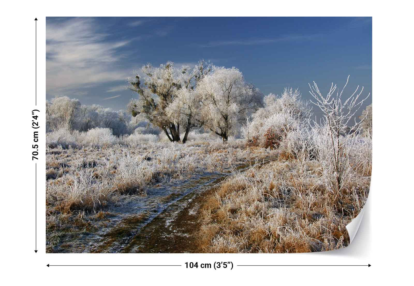 Winter Frost Grassland Grassland Grassland Treetops Path Photo Wallpaper Wall Mural (1X-11175) fd7661