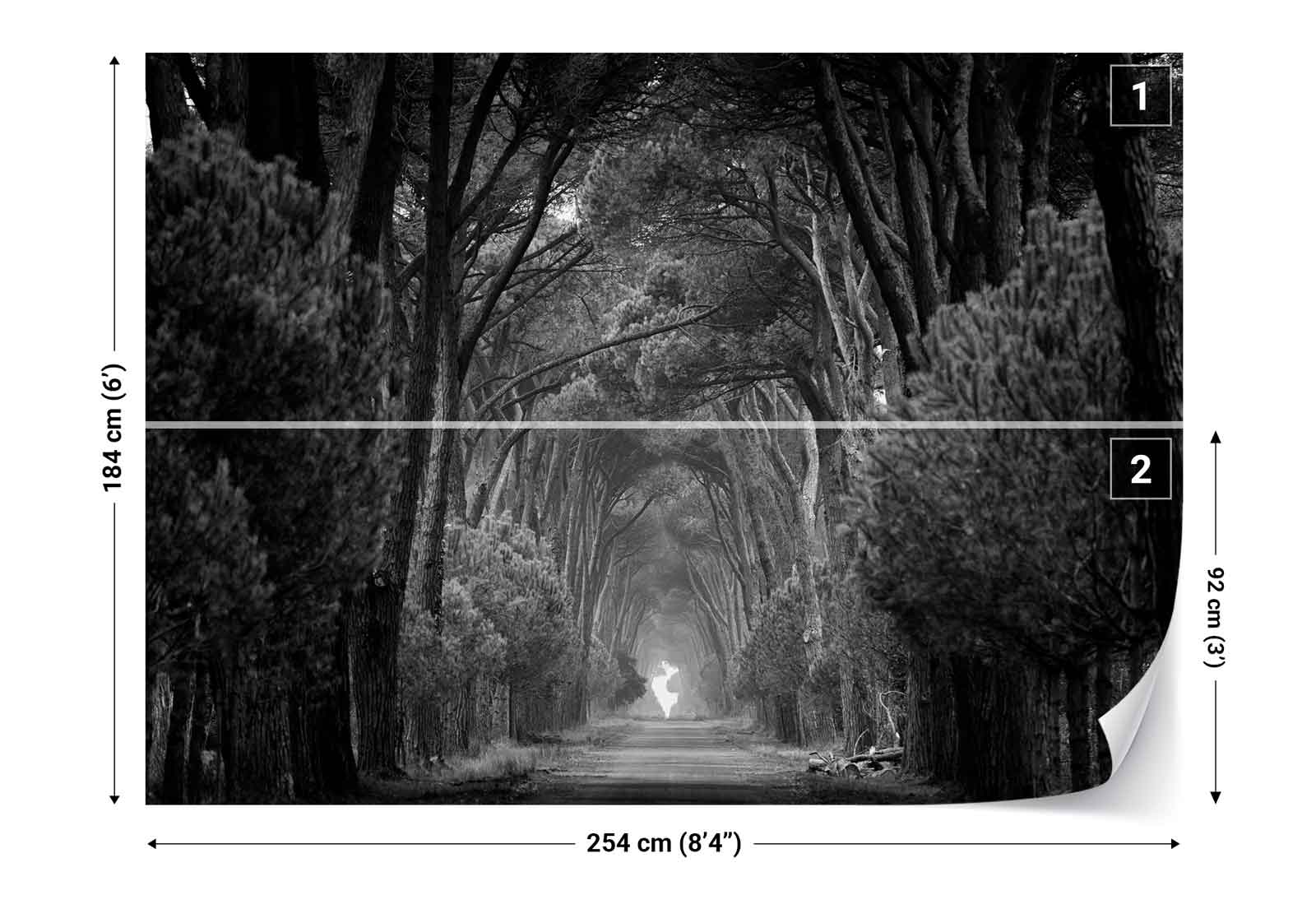 Forest trees road black and white photo wallpaper wall for Black and white tree wallpaper mural