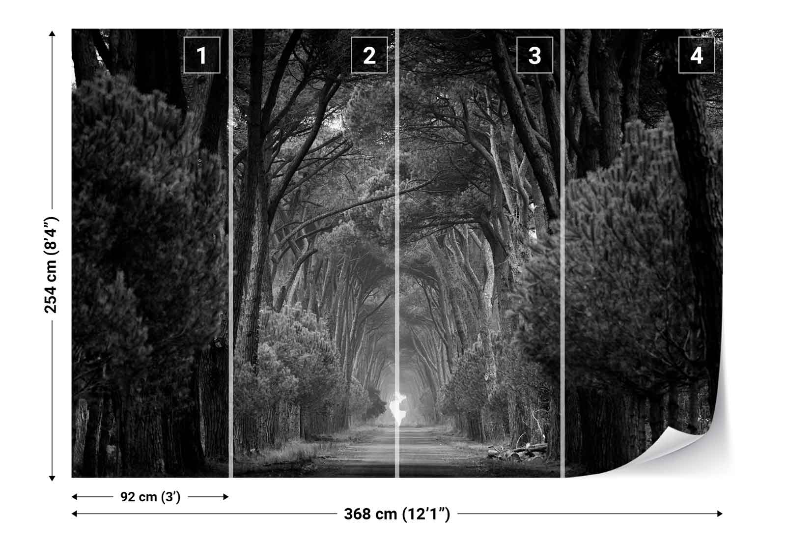 Forest trees road black and white photo wallpaper wall for Black and white forest wall mural