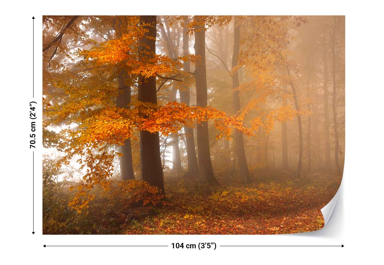 Autumn forest trees leaves cover photo wallpaper wall for Autumn forest wallpaper mural