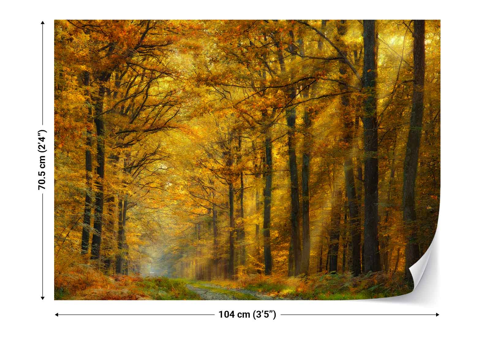 Autumn forest trees lane sunlight photo wallpaper wall for Autumn wall mural