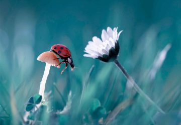 The Story Of The Lady Bug