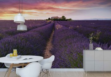 Summer At Valensole