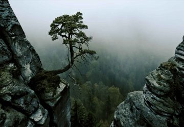 The Lonely Tree In The Cliff