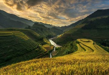 Rice Terrace In Vietnam