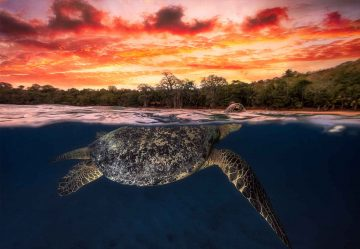 Green Turtle And Fire Sky