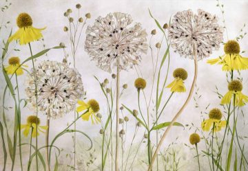 Alliums And Heleniums