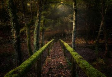 The Way To The Forest