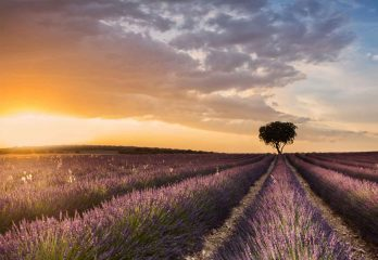 Destination Lavender