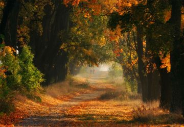 Autumnal Road