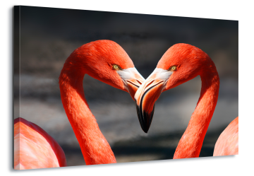 Amour Flamingoes