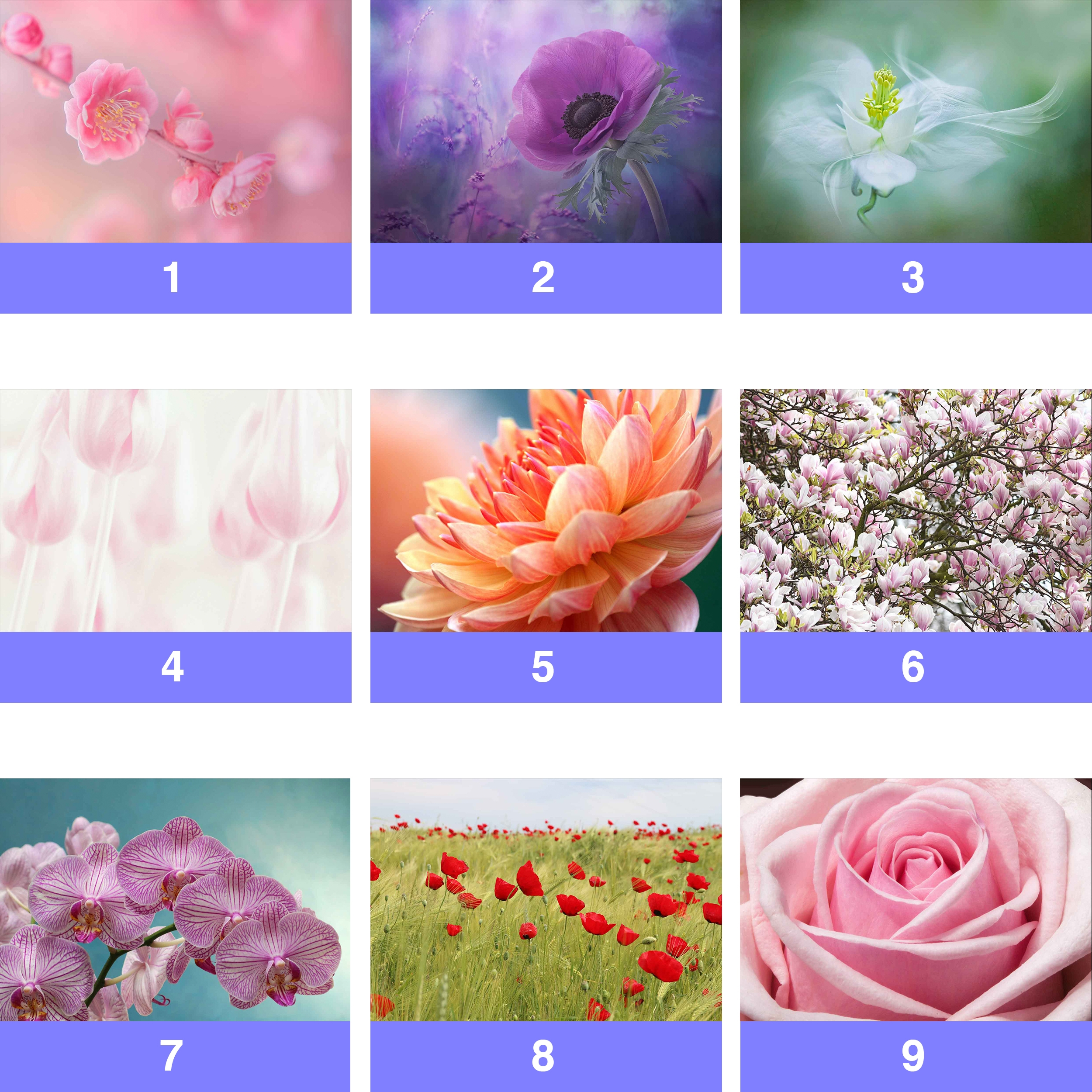 Details About Flowers Floral Rose Blossom Orchid Wall Mural Photo Wallpaper Fl Wm
