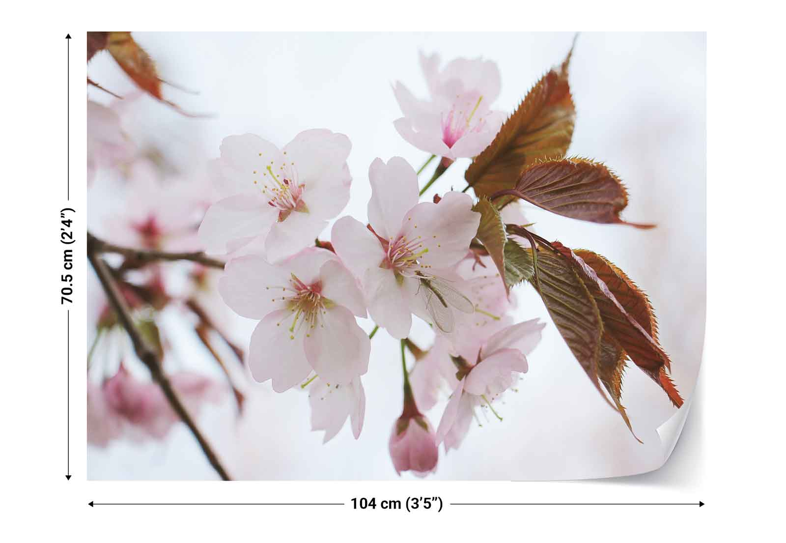 Cherry blossoms spring photo wallpaper wall mural fw 1035 for Cherry blossom wallpaper mural