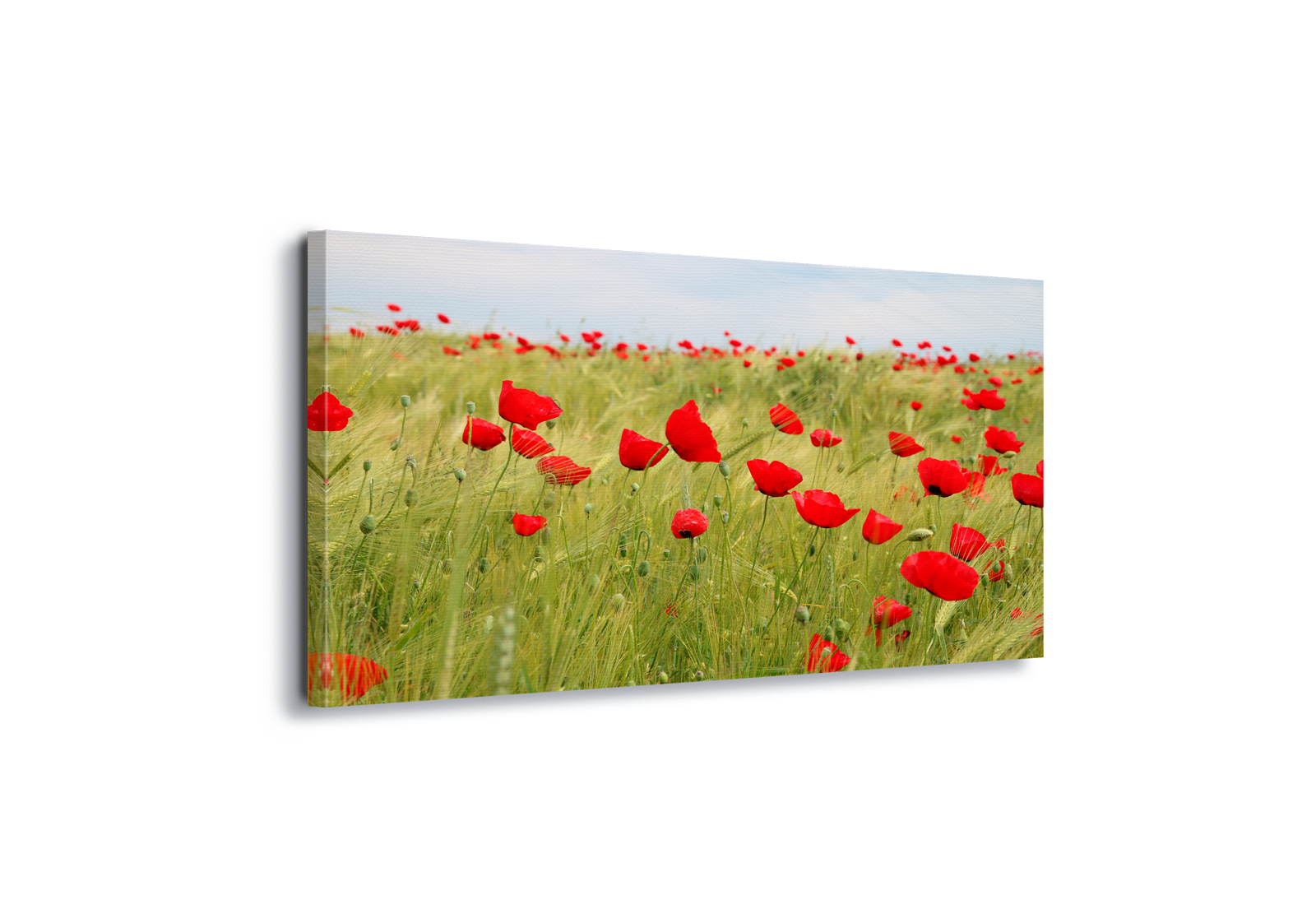 Details about Poppies Field Nature Canvas & Glass Wall Art Pictures (FW-1040)